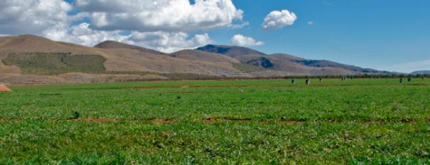 alquian-agricola